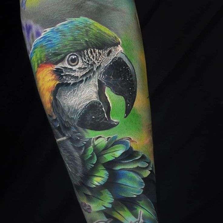 цветная тату попугай
