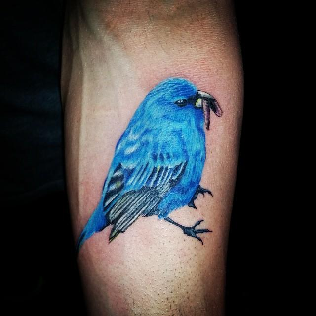 Красочная синяя птица - тату в стиле реализм на мужском предплечье